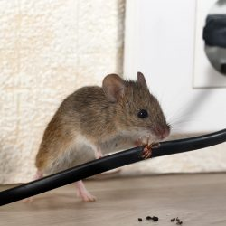 Pest Control Services Home